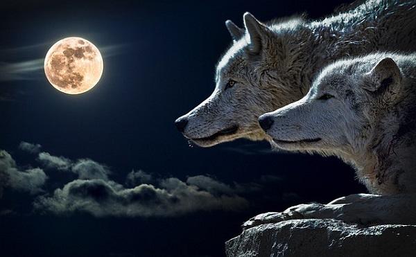 人狼ゲーム 初心者 心得