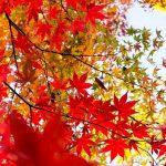 【JOINT会員限定】11/24(土)ハイキング&紅葉狩り@高尾山